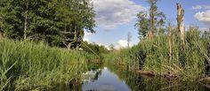 Puszcza Białowieska: Człowiek i las
