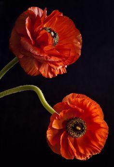 Pretty Orange Blooms
