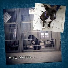 She waits: Dog on Prozac needs special home before she shuts down completely