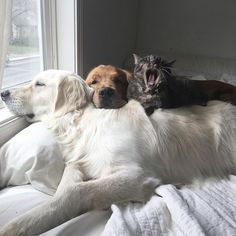 Meet Three Best Friends - Two Dogs And A Cat Who Love Doing Everything Together
