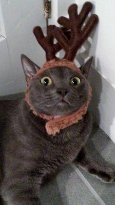 kitty dear...