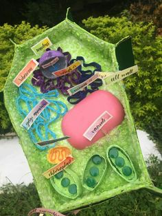 Plant Cell Model Plant Cell Project Models, 3d Plant Cell Model, Animal Cell Project, Science Cells, Plant Science, Science Fair Projects, School Projects, Plant Cell Picture, Science For Kids
