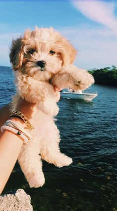 Pictures of dogs and puppies & bilder von hunden und welpen &. - Pictures of dogs and puppies & bilder von hunden und welpen & photos de chiens e - Super Cute Puppies, Cute Baby Dogs, Cute Little Puppies, Cute Dogs And Puppies, Cute Little Animals, Cute Funny Animals, Doggies, Baby Puppies, Cavapoo Puppies