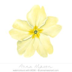"Primrose © 2009 ~ annamasonart.com ~ 23 x 23 cm (9"" x 9"") #AnnaMasonNewSite"