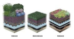 Different types of green roof