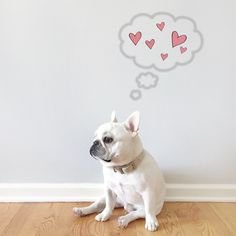 'Theo Bonaparte', thinking of LOVE❤️, French Bulldog, via https://instagram.com/p/2TZNFEiFJ4/?taken-by=theobonaparte