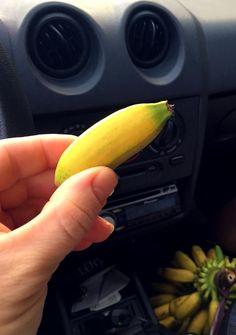 banana de serra #serradomar #paraná