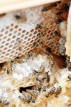 Bees and honeycomb.