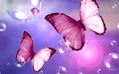 For Pink Lovers Butterfly WP