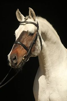 Horse with an unusual face