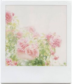 roses by Mengling Zhang @Tony Wang