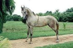 Horse marwR