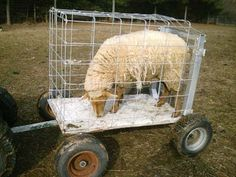 A Handy Sheep Hauler From Discarded Lawn Tractors by Graham Robertson from the November/December, 2010 issue of sheep! Magazine. The Voice of the Independent Flockmaster - Sheep Magazine