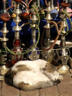 Cat and Chicha, Morocco  www.asilahventures.com