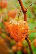 18 Nov 2015 | THE lemonAID BLOG