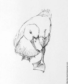 Bird Drawings, Art Drawings Sketches, Animal Drawings, Easy Sketches To Draw, Drawing Birds, Arte Sketchbook, Animal Sketches, Bird Art, Art Tutorials