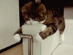 too lazy gif