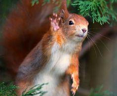 Hello!! | Cutest Paw