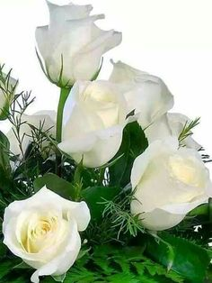 Belles roses blanches <3