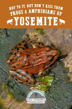 Yosemite is home to a few toad-ally neat amphibians worth checking out! Keep your eyes peeled for the Sierra Nevada Yellow-legged Frog, the Yosemite Toad and the rare California Red-legged Frog. Us National Parks, Yosemite National Park, Clear Night Sky, Travel Alerts, San Francisco Zoo, Travel Expert, Park Service, Sierra Nevada, Live Long
