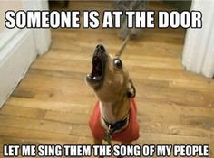 These funny dogs and cats are on a undertaking to make you smile.See more ideas about Funny animals, Dog cat and Cute animals.Read This Top 24 Funny Cats and Dogs Funny Dog Memes, Silly Memes, Funny Cute, Funny Dogs, Pet Memes, Funny Stuff, Hilarious Jokes, Funny Captions, Dog Cat