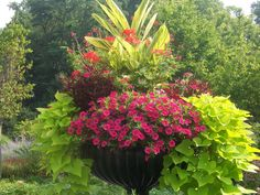 """Finesse With Containers Updated April, 2016 I create containers for clients all the time and am always looking for inspiration to move away from the """"geraniums withspike and trailer""""…"""
