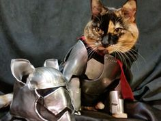 10 Cats Who Have Turned To the Dark Side: Revenge of the Fifth – Meowingtons