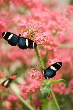as the sun is shining so are the butterflys
