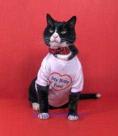 Tuxedo cat dressed for dinner