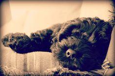 Charlie-Bear<3