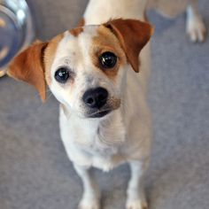 Kingsley - SPCA of Texas (McKinney)