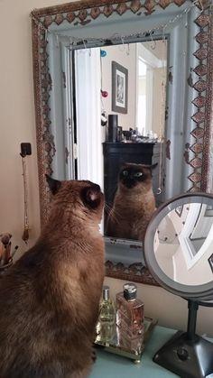 WTF | 30 keer bewijs dat het leven nooit saai is met katten