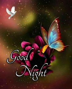 Cute Good Morning Images, Cute Good Night, Good Night Sweet Dreams, Good Morning Flowers, Good Night Image, Good Night Messages, Good Night Quotes, Good Knight, Beautiful Love Pictures