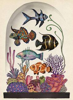 Katie Scott, illustration from Animalium