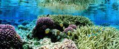 PACIFIC OCEAN PRESERVE