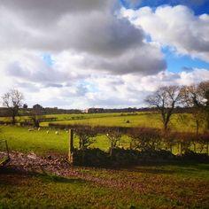 Anglesey looking lush after the rain #anglesey #farmland #rain #sheep #sunnyday #lush #wet #countryside #bryncellidu #llanfairpwllgwyngyllgogerychwyrndrobwllllantysiliogogogoch