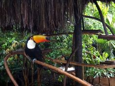 O Parque das Aves de Foz do Iguaçu é um dos passeios mais agradáveis e bonitos na cidade. Um lugar lindo para toda a família. Veja o post no blog! -------- The Bird Park of Foz do Iguaçu is one of the most pleasant and beautiful places in the city. A beautiful park for the whole family. Check on the blog! -------- #parana #parquedasaves #fozdoiguaçu #brasil #bird #passaros #bestvacations #igtravel #instatravel #photooftheday #picoftheday #traveladdict #travelblog #travelgram #trip #viagem…