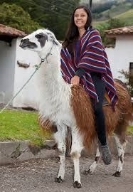 Riding a llama Llamas, Llama Alpaca, Fantasy Story, Livestock, South America, Art Reference, Sheep, Goats, Transportation