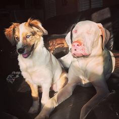 Blind And Deaf Dog Meets A Friend Who's Just Like Her