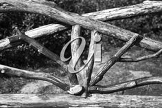 iPHOTOS.com - Wooden Bench made from dry tree branches in black and white.