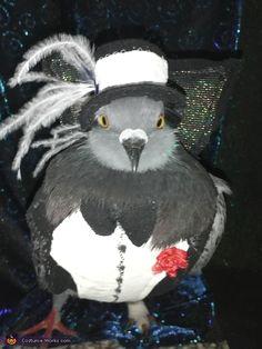 Pet Pigeon - 2012 Halloween Costume Contest