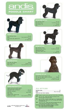 poodle grooming chart ...........click here to find out more http://googydog.co #poodle grooming chart ...........click here to find out more http://googydog.com