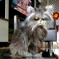 Moony the Werewolf Cat Looks Like He's Seen a Full Moon or Two