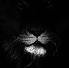 Cats black and white photography lion super Ideas