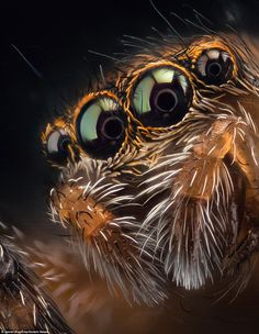 Javier Rupérez takes close up photos of spiders Macro Photography Tips, Micro Photography, Double Exposure Photography, Levitation Photography, Close Up Photography, Nature Photography, Winter Photography, Abstract Photography, Beach Photography