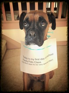 Dog could teach class on sad puppy eyes Boxer Dogs Facts, Boxer Puppies, Dogs And Puppies, Boxer And Baby, Boxer Love, Funny Boxer, Funny Dogs, Dog Shaming, Online Pet Supplies