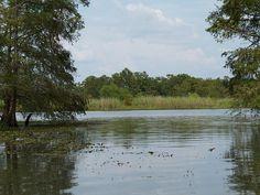 Alligator Swamp Tours on the Texas Louisiana border