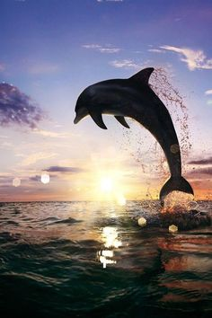 Beautiful Dolphin Jumping from Shining Water | by: { Vitaliy Sokol }