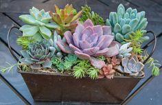Succulent arrangement in bronze metal by iDreamOfSucculents, $27.99
