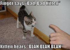 Hahaha! Indeed!!   From: https://www.facebook.com/CatsAllDayEveryDayPurrrrfect